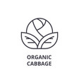 organic cabbage line icon outline sign linear vector image vector image
