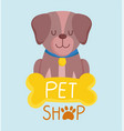 pet shop little dog sitting with collar and bone vector image vector image