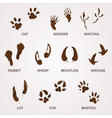 wildlife tracks vector image