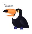 Toucan cartoon bird isolated on white vector image