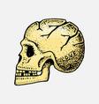 anatomical human skull skeleton head vector image vector image