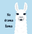 cute llama isolated vector image vector image