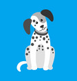 dog puppy with spots canine wearing collar on neck vector image