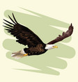 eagle frying drawing vector image vector image