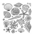 marine collection ornate seashells for your vector image