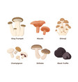 mushrooms set in flat vector image vector image