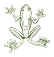 tropical tree frog vector image vector image