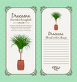 vintage label with dracaena plant vector image vector image