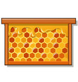 wooden frame with sweet golden honeycomb with vector image