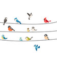 colorful birds sitting on wire isolated on white vector image vector image