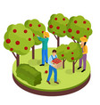 fruit harvesting isometric composition vector image vector image