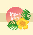 tropical leaves round banner monstera palm vector image vector image