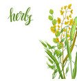 background with herbs and cereal grass floral vector image vector image