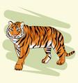 beautiful tiger drawing vector image vector image