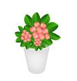 Fresh Crown of Thorns in A Flower Pot vector image vector image