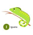 letter i iguana zoo animal alphabet english abc vector image vector image