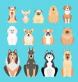 different dogs breed isolated vector image