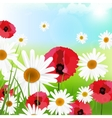 Camomile poppy vector image vector image