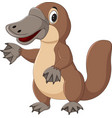 cartoon platypus isolated on white background vector image vector image