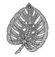 monstera leaf vector image vector image