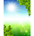 Summer background with green leaves vector image vector image