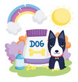 black dog with bones food package pets vector image vector image