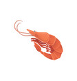 cartoon with sea shrimp in flat style vector image vector image