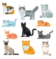 Cat breeds poster cute pet animal set vector image