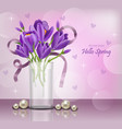 crocus ultra violet flowers bouquet spring vector image