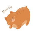 Manx cat isolated on white vector image vector image
