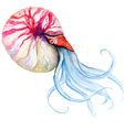 squid watercolor vector image