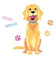 sketch funny golden retriever dog sitting vector image