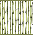 bamboo seamless vertical pattern on white vector image vector image