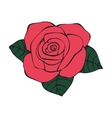 Rose in tattoo style vector image