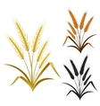 ears of wheat rye or barley decorate element set vector image vector image