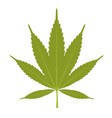 leaf of marijuana - cannabis on white background vector image vector image