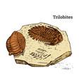preserved trilobite specimen fragment fossil vector image vector image