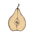 juicy pear hand drawn isolated icon vector image