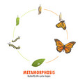 butterfly life cycle metamorphosis vector image vector image
