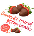 chocolate covered strawberries icon isolated on vector image vector image