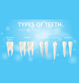 realistic types of teeth in 3d vector image