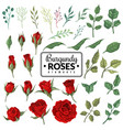 red roses garden burgundy rose flowers floral vector image