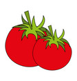 tomato food flat vector image vector image