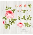 Wedding flowers bundle vector image vector image