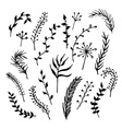 Hand drawn branches vector image