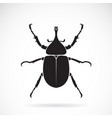 dynastinae on a white background insect animal vector image vector image