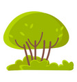 green trees or bushes grass isolated spring vector image vector image