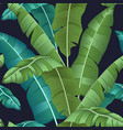 seamless turquoise and green tropical pattern vector image