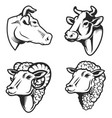 set of cow and sheep heads on white background vector image vector image