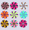 set of flowers with colorful vector image